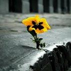 flor asfalt