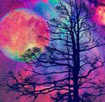cel arbre rosa